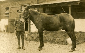 a soldier and his horse