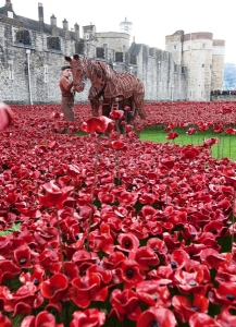 http://www.broadwayworld.com/westend/article/Photo-Flash-WAR-HORSEs-Joey-and-Author-Michael-Morpurgo-at-the-Tower-of-London-20141020 Joey, star of War Horse, at the Tower of London